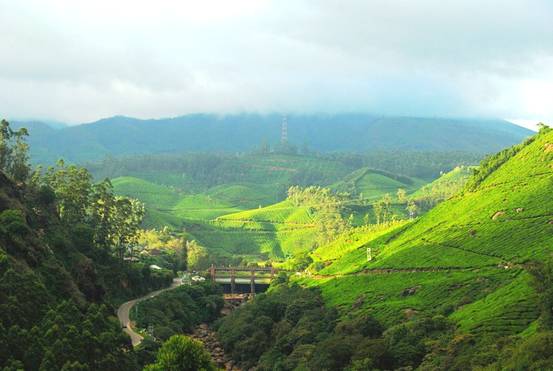 Munnar Landscape in Monsoon