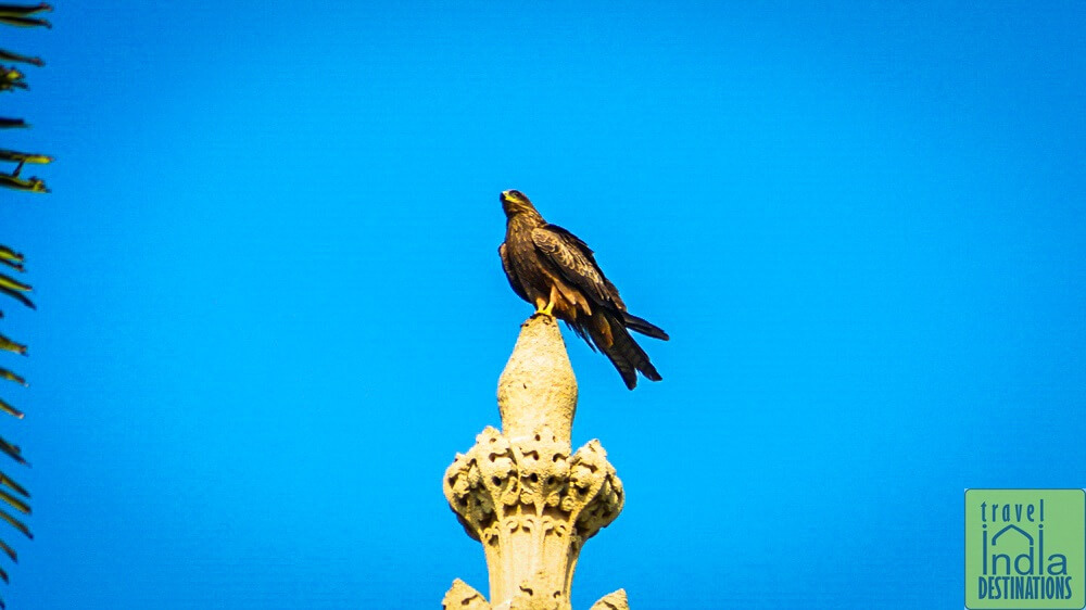 Kite at Mumbai University