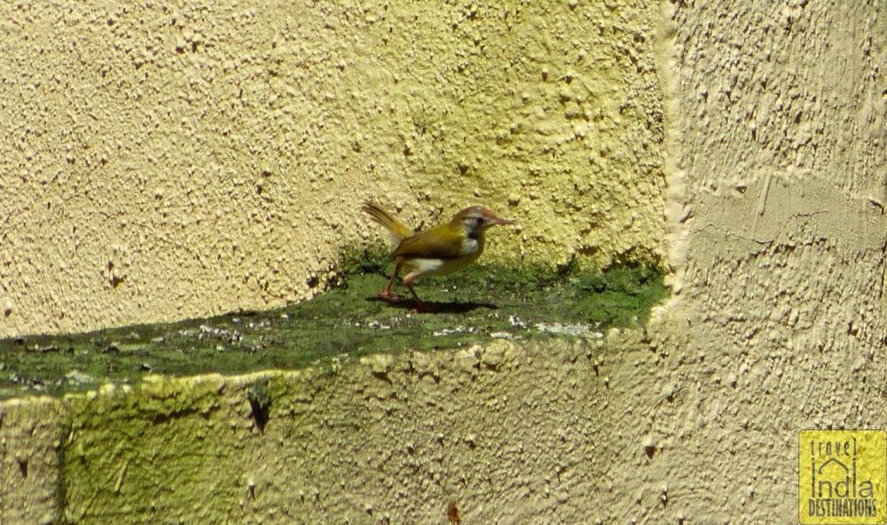 Tailorbird Vasai