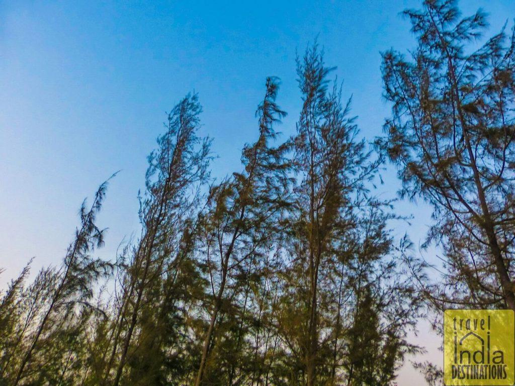 Suruchi Beach Vasai