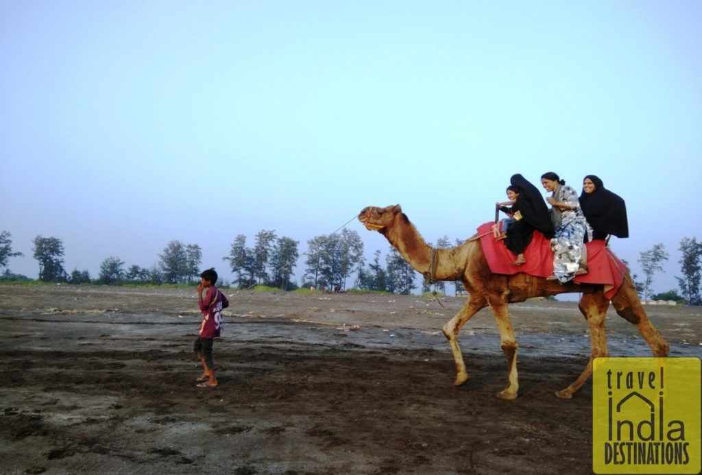 Camel Ride at Suruchi Beach