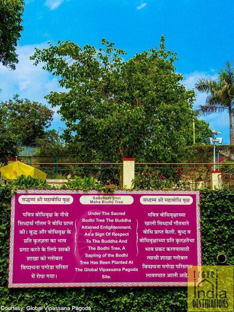 Global Pagoda Bodhi Tree