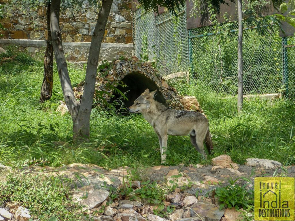 Sajjangarh Biological Park